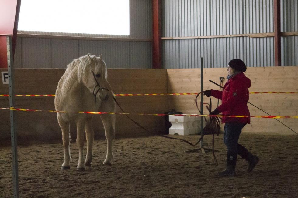 Charming curly horses Sida 2 av 2