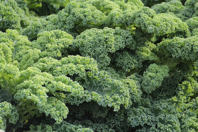 hur nyttigt är grönkål